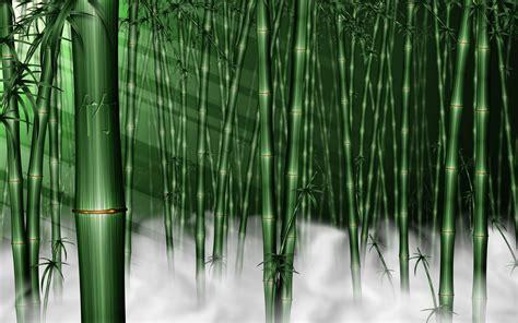 Forest Wallpaper for Room - WallpaperSafari