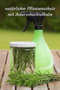 Was Machen Milben : nat rliche pflanzenschutzmittel mit ackerschachtelhalm ~ Lizthompson.info Haus und Dekorationen