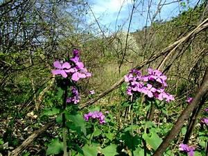 Welche Blumen Kann Man Essen : essbare blumen im garten my flowers ~ Watch28wear.com Haus und Dekorationen