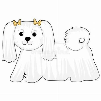 Maltese Dog Puppy Cartoon Drawing Poodle Illustration