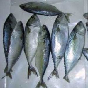 daily english fish names  english  tamil