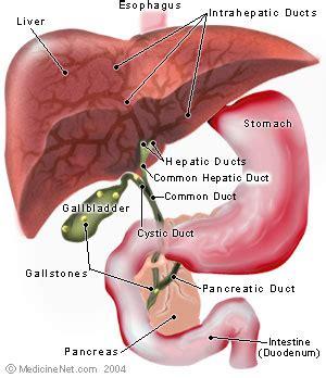 definition  left hepatic duct
