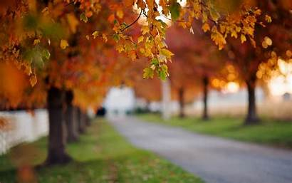 Blur Wallpapers Background Nature Tree Trees Bokeh
