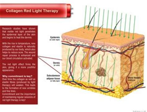 red light therapy bed planet fitness 1000 images about red light therapy on pinterest planet
