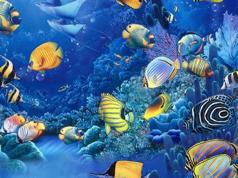 bau da web imagens fundo  mar