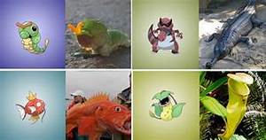 real life pokemon groudon images