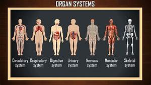 How Many System In Human Body Pdf