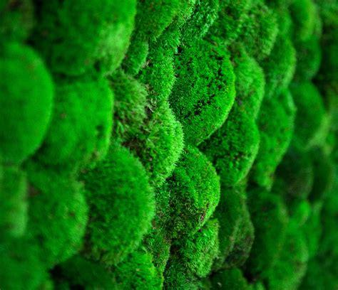 showroom ball moss green mood nature  lifestyle
