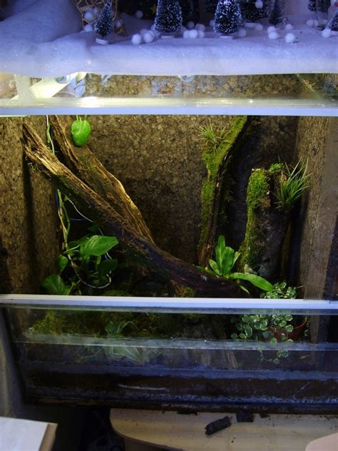am 233 nagement terrarium hylas cinerea