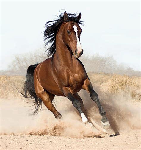 horse fastest most animals