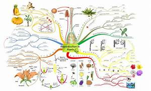 Create Your Own Mind Maps