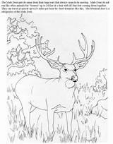 Coloring Deer Mule Buck Animals Hunting Doe Drawing Wood Printable Animal 2630 Adults Drawings Browning Carving Benefit4kids Cartoon Getcolorings Popular sketch template