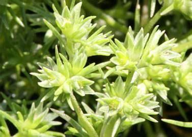 fiori di bach opinioni fiori di bach per curarsi in modo naturale con la