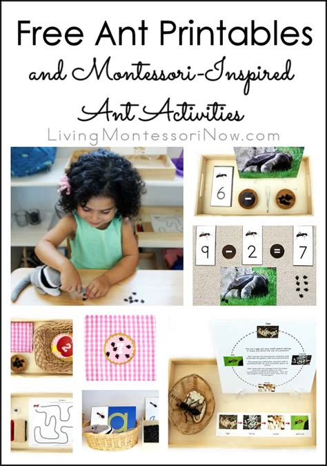 free ant printables and montessori inspired ant activities 811 | Free Ant Printables and Montessori Inspired Ant Activities