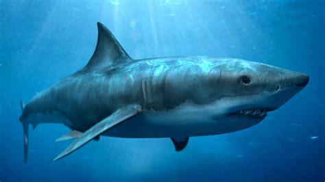 Megalodon Images The Sea Megalodon Shark