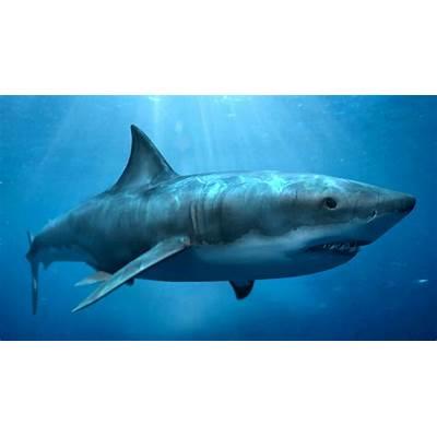 LIFE UNDER THE SEA: MEGALODON SHARK