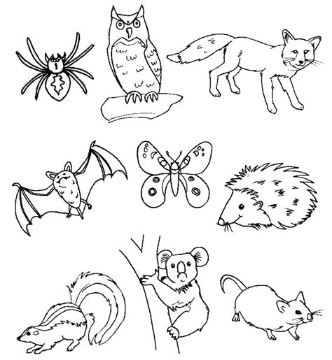 disegni da colorare animali sta disegno di animali bosco da colorare