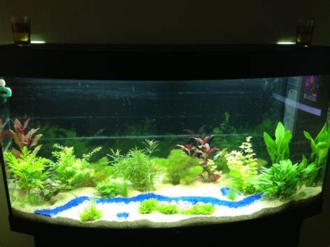 decoration d aquarium eau douce