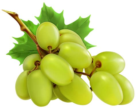 wedding ribbons white grapes png clipart best web clipart