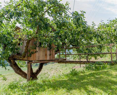 maison en bois dans les arbres cabanes dans les arbres sur pilotis ou sur l eau par ecobane