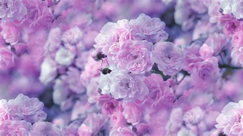 Purple Flowers Wallpapers 76 Images