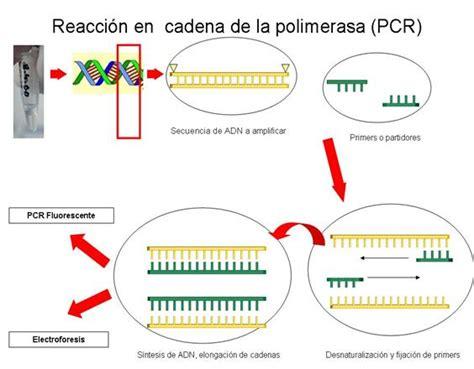 bureau de la pcr biología molecular pcr en enfermedades cerebrovasculares