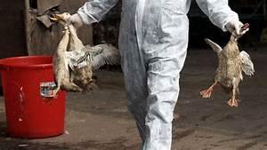 H7n9 Avian Influenza  Virus Widens Geographic Reach In