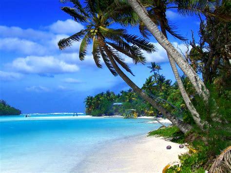 beach  cayman islands tropical landscape ocean blue