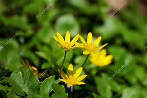 Blumen Im Frühling : gelbe blumen bl hen im fr hling stockfoto bpm82 72554467 ~ Orissabook.com Haus und Dekorationen