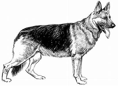 German Shepherd Sketch Clip Onlinelabels