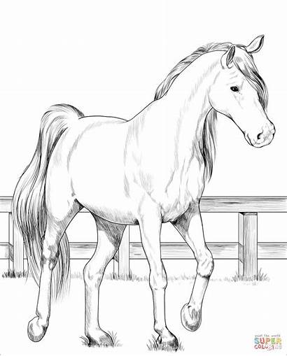 Horse Coloring Pages Trakehner Printable Sheets Drawing
