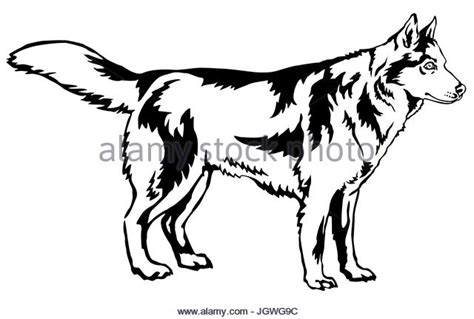 Sled Dog Black And White Stock Photos & Images