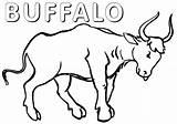 Buffalo Coloring Animal Buffalo3 Coloringway sketch template