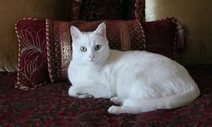 Laid Back Cat by Linwood Branham
