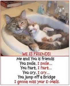 friends of cats we iz friends meme cats