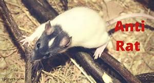 Piege à Rat Efficace : anti rat r pulsif pour chasser les rats ~ Dailycaller-alerts.com Idées de Décoration