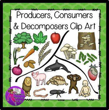 producers consumers decomposers clip art clip art