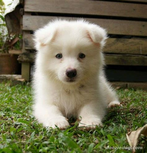 22 Best Images About Hypoallergenic Dogs On Pinterest