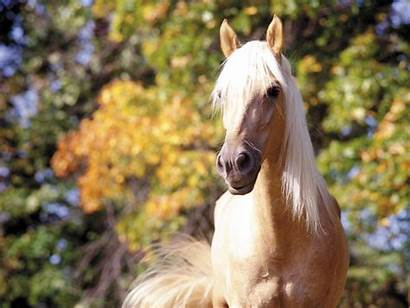 Wallpapers Horses Autumn Horse