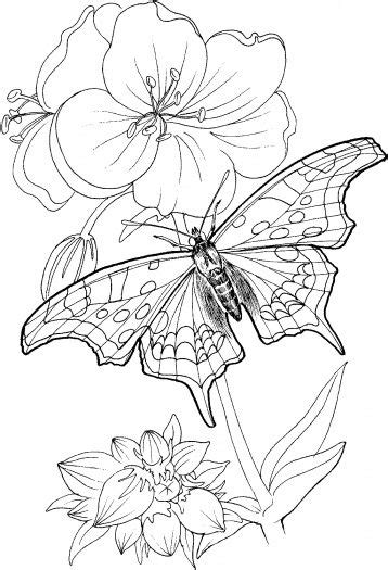*Butterfly Stands On A Plant | flower tattoos | Pinterest | Flower prints, Coloring and Stitches