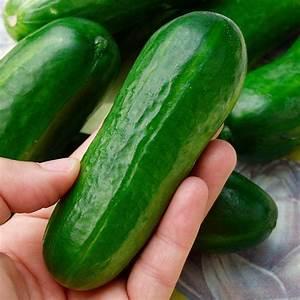 Mini Gurken Pflanzen : gurkenpflanze iznik f1 online kaufen bei g rtner p tschke ~ Buech-reservation.com Haus und Dekorationen