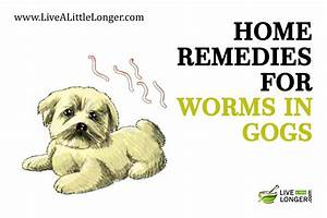 The gallery for --> Worms In Dog Poop