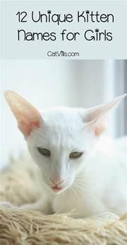 unique cat names 12 unique kitten names for your cat catvills