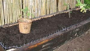Schneckenzaun Selber Bauen : pflanzen hinter gittern ein versuch der schneckenwehr ~ Lizthompson.info Haus und Dekorationen