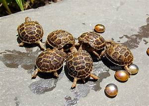Tortaddiction: Baby Russian tortoise update!