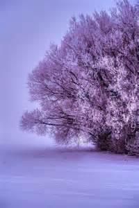 Purple Winter Landscape