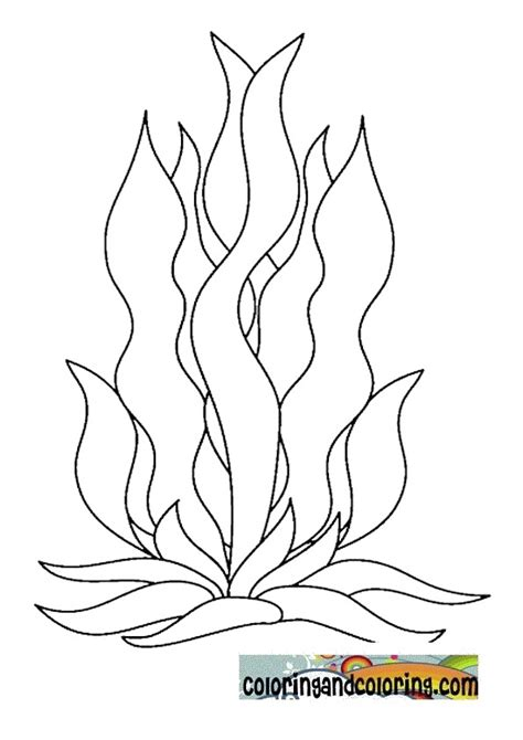 seaweed color free coloring pages of seaweed for