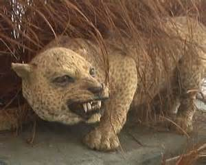 Zanzibar Leopard Extinct Animals