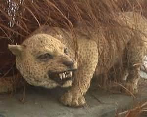Zanzibar Leopard Extinct Animals