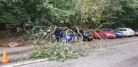 autos beschadigd door afgebroken tak coevorder nieuws